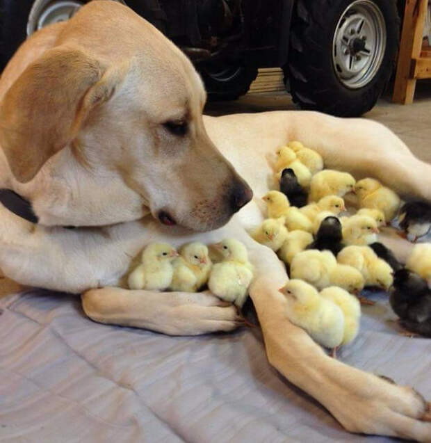 19. Этой собаке сложно решить, кому сделать бип-бип первым животные, носы, прикол, юмор