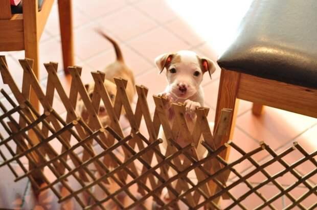 Собакам приходится сложнее, чем все думают! Забавная подборка