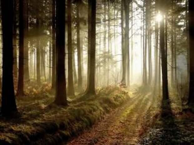 Деревянные тайны