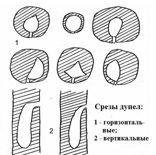 Рис. 23. Схемы разрезов через дупла малого пёстрого дятла. По: Иванчев 1995а.