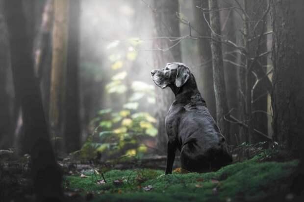 Первое место в категории «Старички» великобритания, животные, интересное, конкурс, собака, собаки