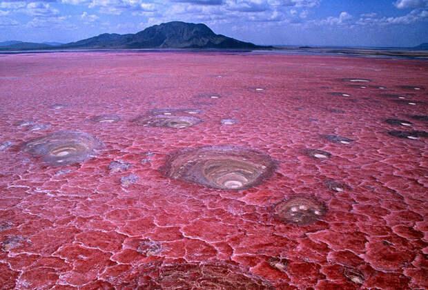 Натрон, Танзания. Красные воды озера Натрон несут в себе невообразимое количество соли и щёлочи, убивая и обращая в камень большинство животных и птиц, случайно попавших в них. Как ни странно, этот жуткий феномен не действует на малых фламинго, для которых озеро является единственным местом размножения. Никакой хищник не осмелится напасть на них в этом «проклятом» месте.