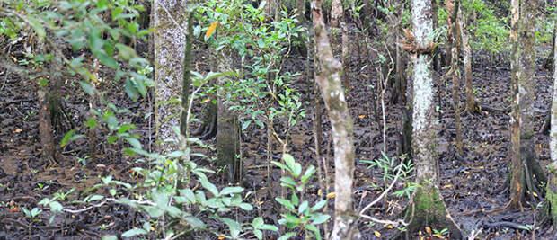 Лес, которому 150 000 000 лет