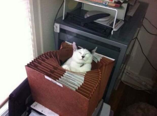 Почему бы не уснуть в коробке для документов и прочих бумаг?