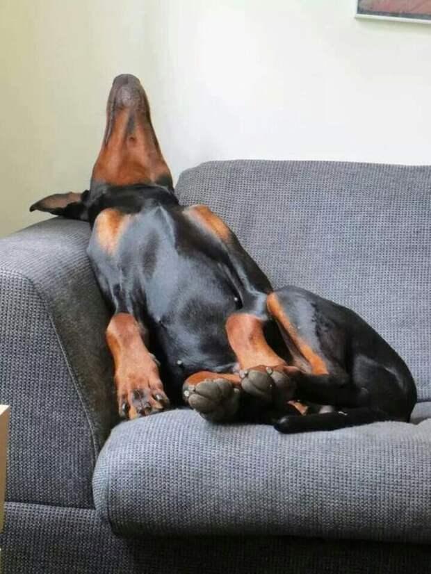 Snoring like thunder! #dogs #pets Re-pinned from Forever Friends Fine Stationery & Favors http://foreverfriendsfinestationeryandfavors.com:
