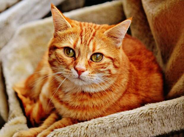 Зоолог рассказала, почему кошки боятся пылесоса