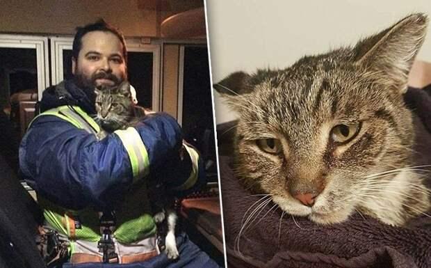 Кот из трамвая добро, животные, спасение