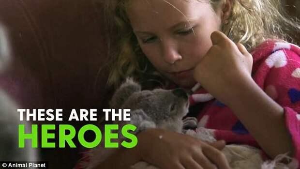 """""""Заклинательница коал"""" 10-летняя девочка с особым даром выхаживает маленьких детенышей"""