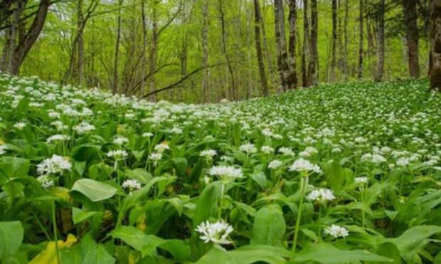 Польза, лечебные свойства и противопоказания к употреблению растения колба
