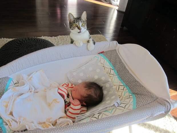 2. А ему заранее не сообщили, что в семье ожидается прибавление  год, кот, событие