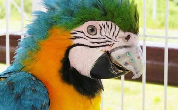 Клюв для попугая напечатали на 3D-принтере добро, животные, спасение