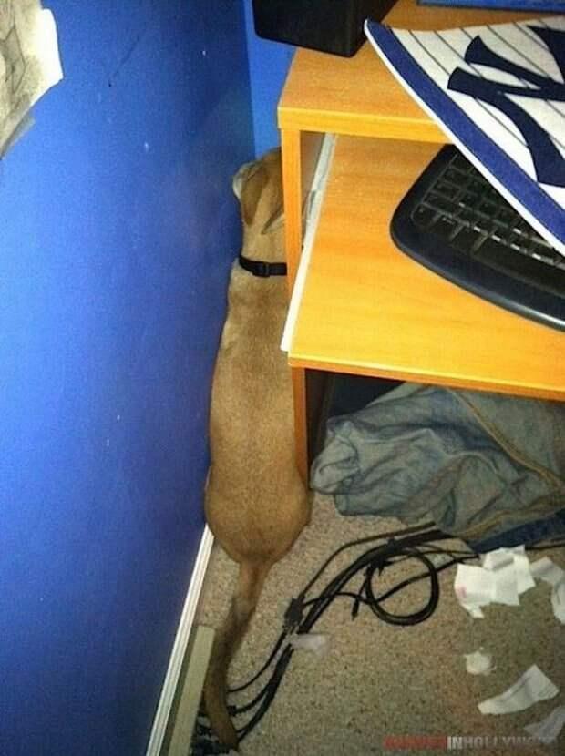 Собачки которые очень хотели спрятаться-11