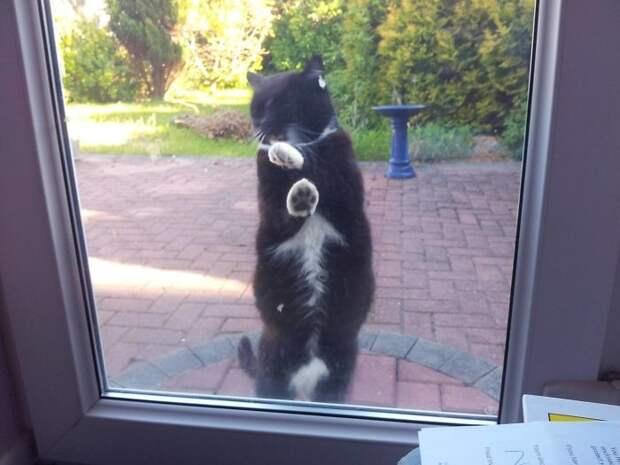 И эта кошка сделала свой выбор и решила жить именно в этом доме встреча, гости, дружба, животные, коты, кошки, неожиданно, фото