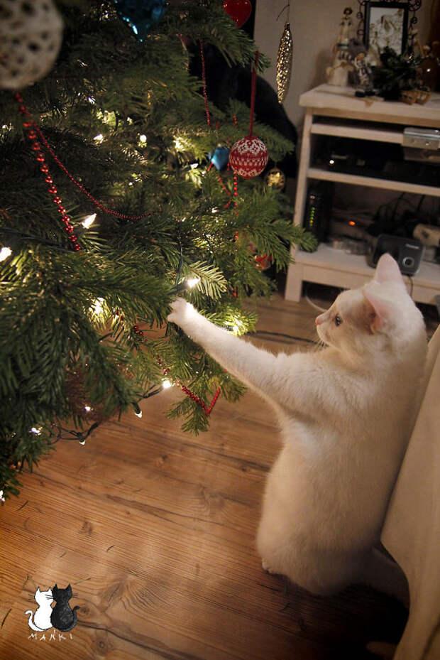 7. Теперь она висит на своем месте  елка, кошка, подборка