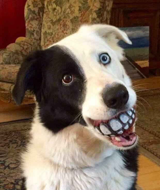 Собака с мячиком и зубами