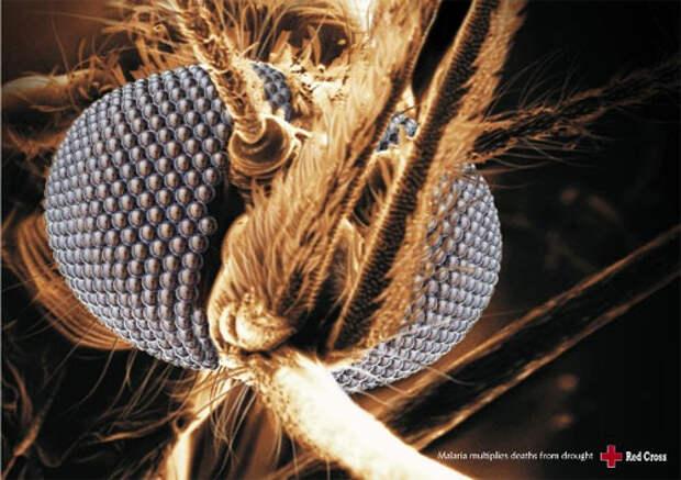 Чикатило среди насекомых