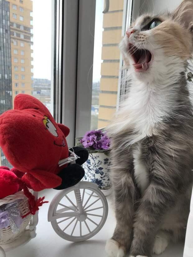 Ищет самых лучших хозяев кошка невероятной красоты!