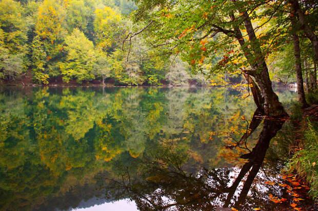 Отражение золотой осени