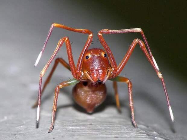 Настоящие инопланетяне: впечатляющие насекомые и пауки крупным планом