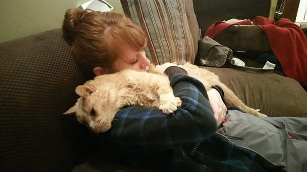 21-year-old-cat-adopted-kidney-failure-tumor-tigger-adriene-buisch-9