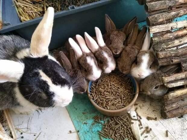 Животные, усыновлённые из приютов в марте