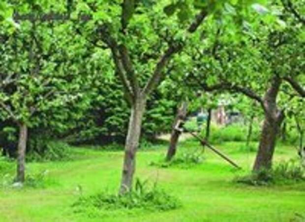 Полив деревьев: от саженца до взрослого дерева