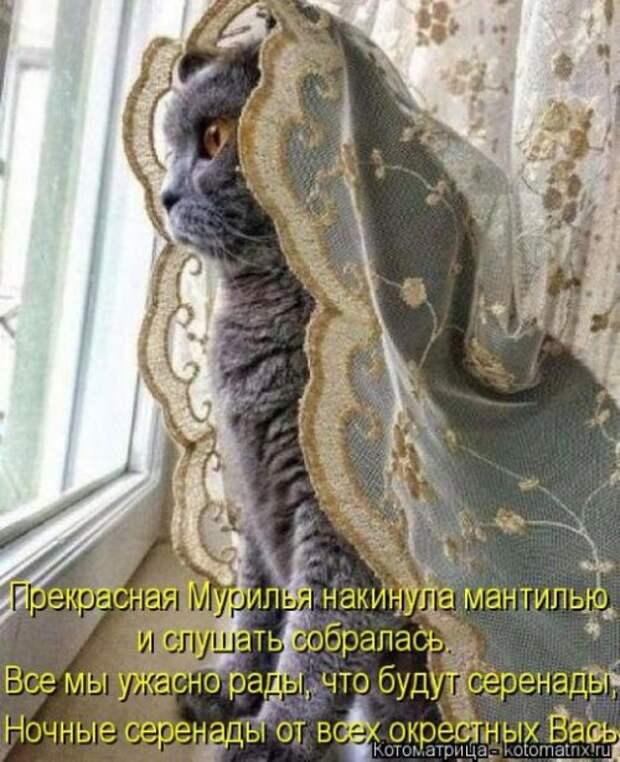 Свежая котоматрица (36 фото)