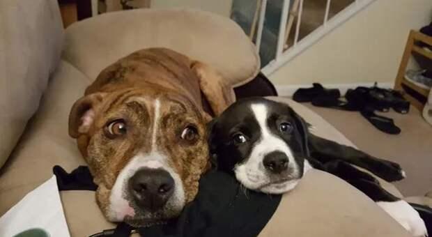 Случай помог щенку найти любящего хозяина, а у офицеру — верного друга