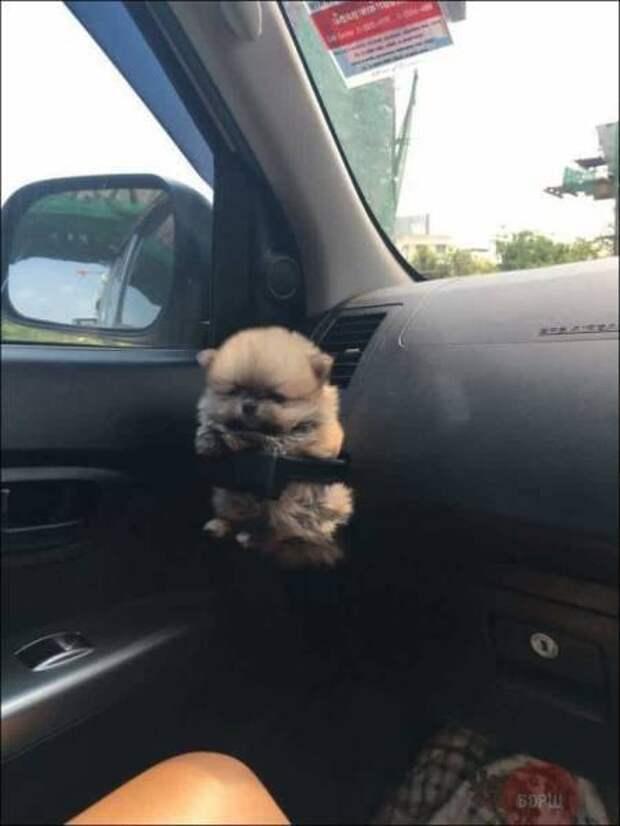 Держатель для щенков
