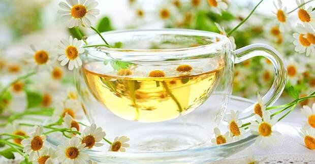 Чем полезен ромашковый чай | Passion.ru