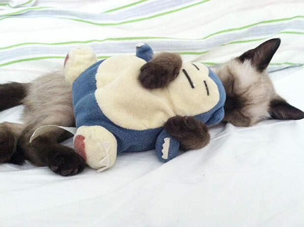 26. С любимой игрушкой котенок, сон