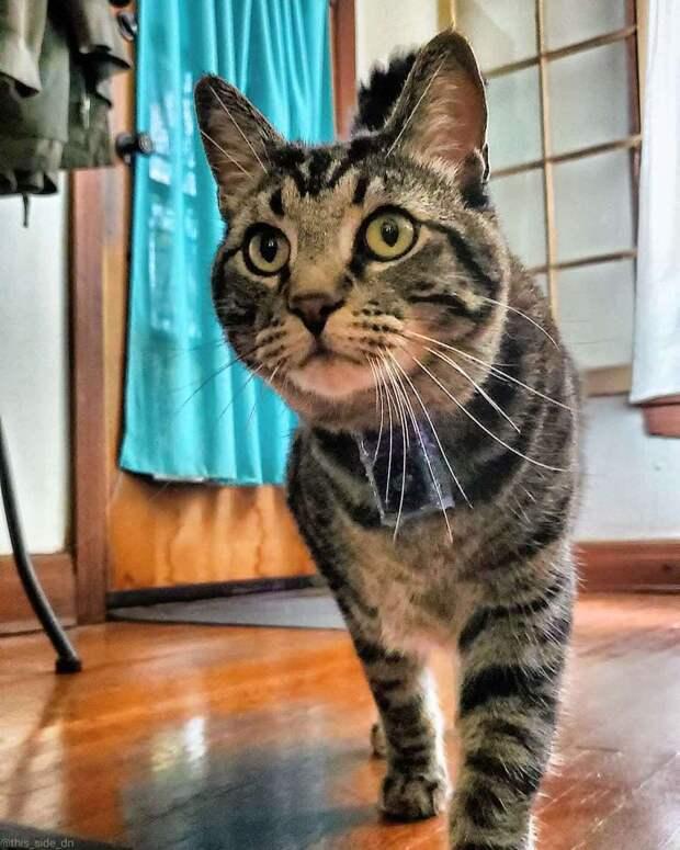 Семья взяла котика из приюта, и он в знак благодарности приносит им подарки