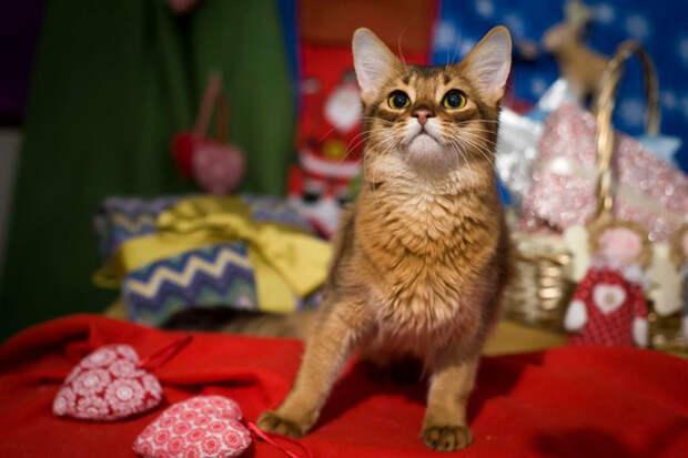 Пятничный котик Симба – любить, а не усыплять!