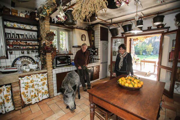 Домашняя дикая кабаниха Паскалина тоже любит ласку и внимание
