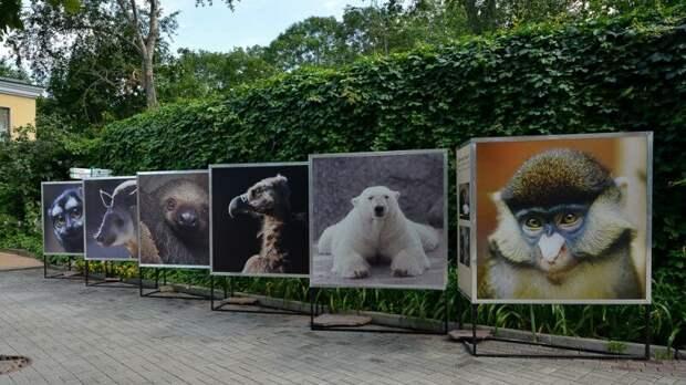 Билеты в Ленинградский зоопарк подорожают с 1 мая