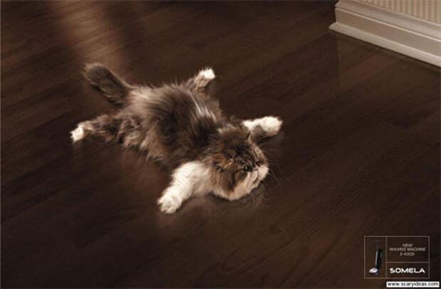 Коты как рекламная технология
