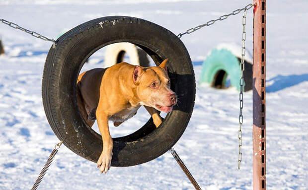 Самые недооценённые породы собак