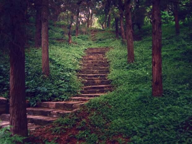 Портал между мирами — кто оставляет таинственные лестницы в лесу, которые никуда не ведут