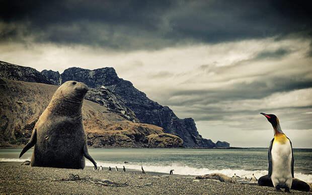 Фауна Антарктиды