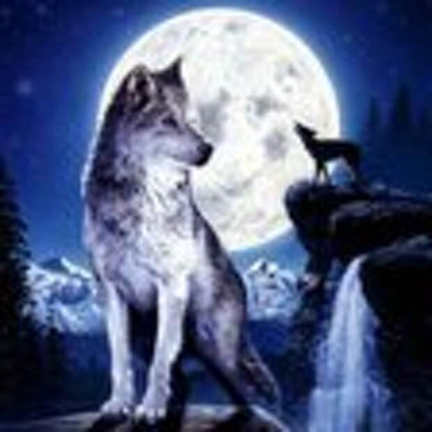 ночь и волк