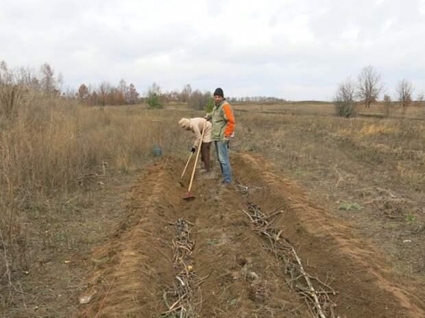 грядка Розума: Органическое земледелие, пермакультура