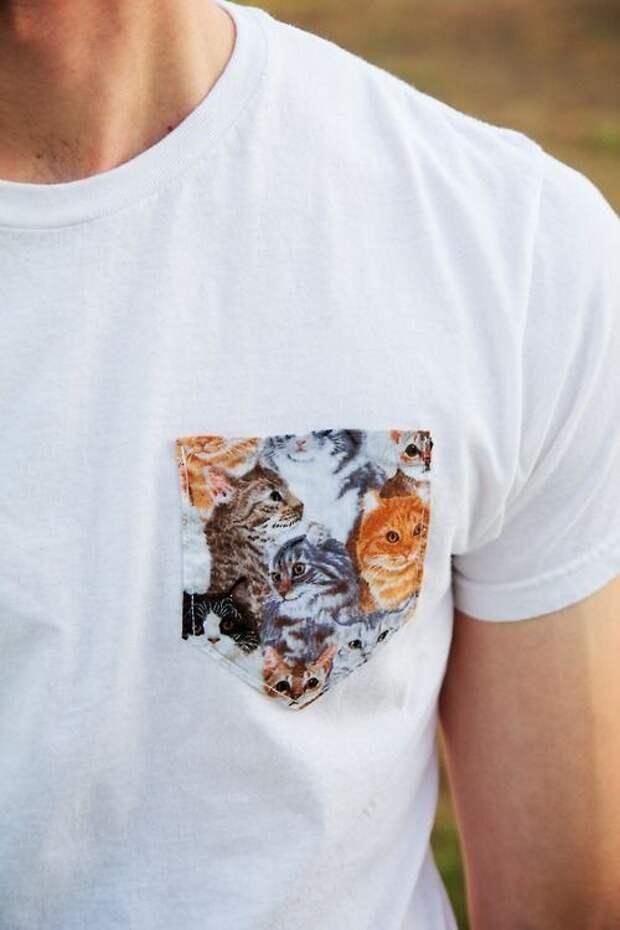 Полный карман котят