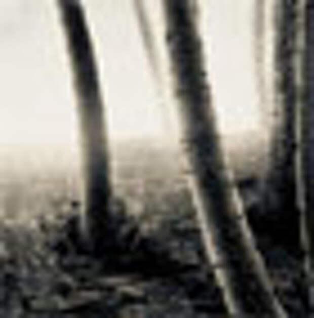 Как повысить лесистость-волосистость
