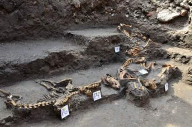 В Аскапоцалько (Мехико) найдено древнее захоронение 12 собак. Фото - Melitón Tapia, INAH