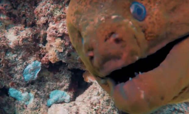 Акула высматривала чем поживиться и случайно столкнулась с муреной