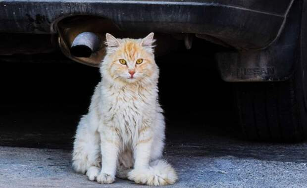 Кот убил младенца в коляске на Украине