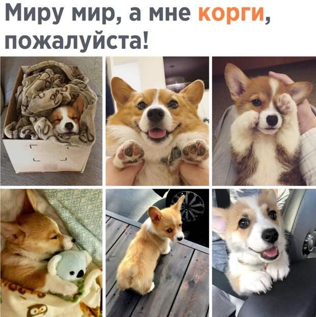 Забавные, смешные и классные фото с надписями из сети