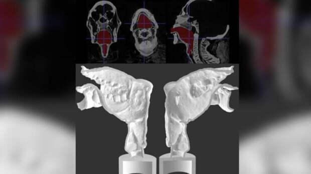 Ученые заставили говорить древнюю мумию