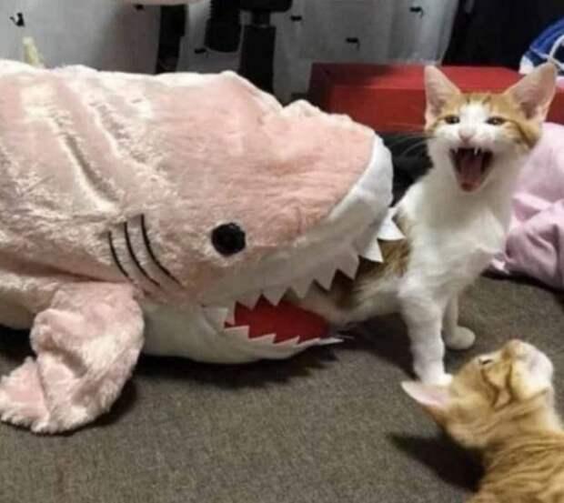 Акула и кот
