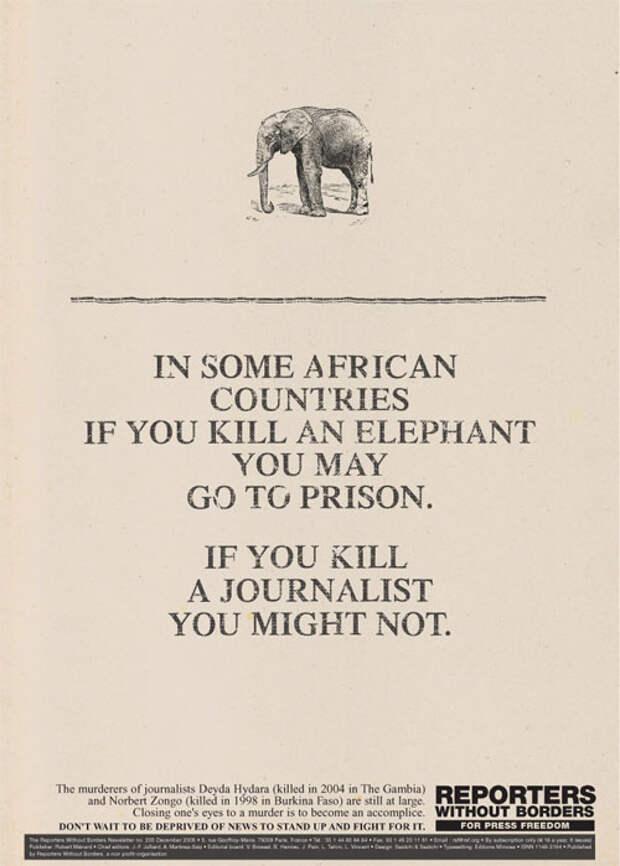 Кто важнее – журналист или животное?